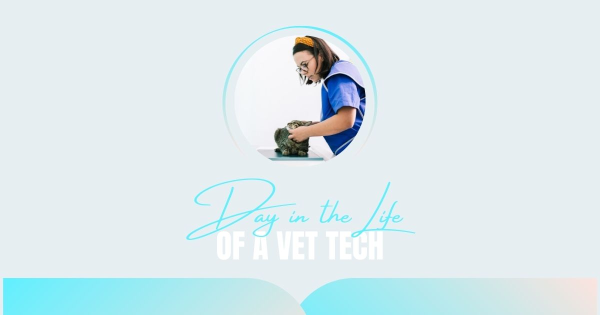 Day in a Life of a Vet Tech