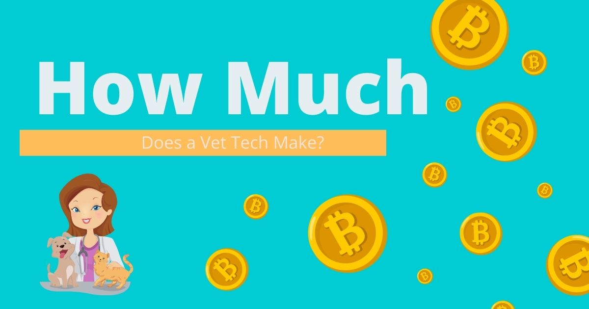 How Much Does a Vet Tech Make?