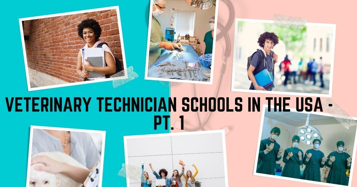 Veterinary Technician Schools In the USA - Pt. 1